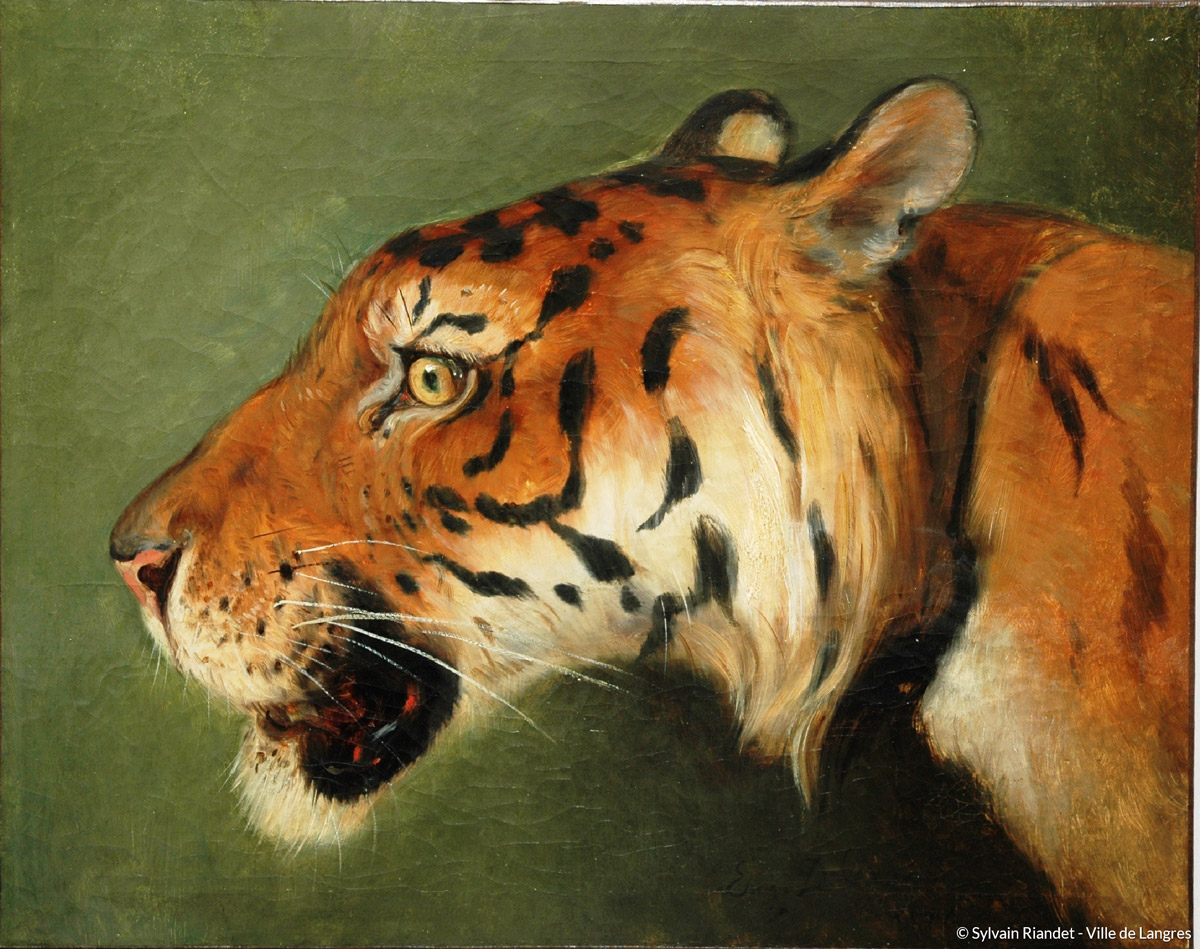 T te de tigre mus es de langres maison des lumi res - Image tete de tigre ...